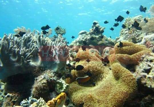 Pulau Abang Surga Bagi Para Pecinta Snorkeling dengan Keindahan Blue Coral